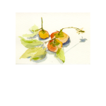 Persimmons 35<br />