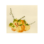 Persimmons 9<br />